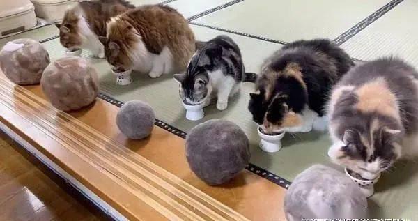 猫咪掉毛,主人累积5年集结成专属于每只猫的猫毛球!
