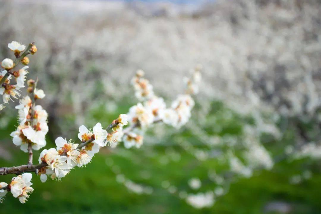 七星彩:26个春天的成语,原来都出自诗词 网络快讯 第7张