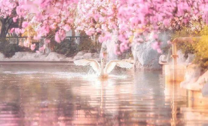 wps下一页:三月桃花开,春天按时来 网络快讯 第6张