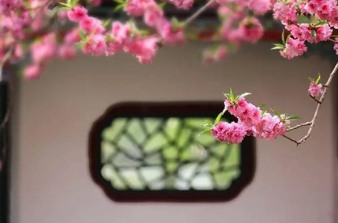 wps下一页:三月桃花开,春天按时来 网络快讯 第9张