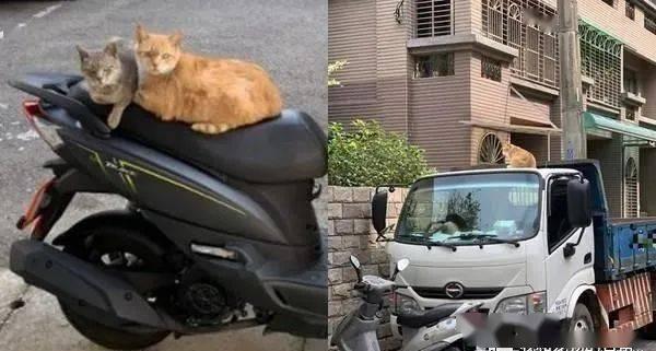 远看橘猫僵硬躺在路边,以为发生什么意外,走近一看发现真相笑喷...