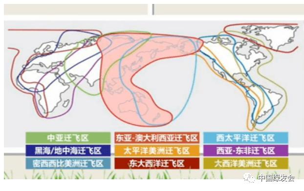 """中国绿发会成为""""CMS中亚迁飞区倡议""""观察员"""