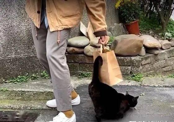 在街上散步突然被2只小猫缠上,俨然一副猫小三的嚣张架势!