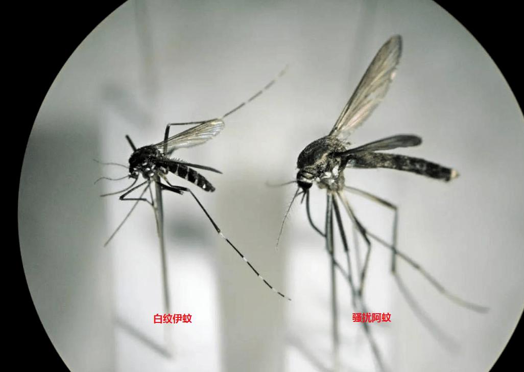 """春季天气回暖,千万当心""""越冬蚊""""!"""