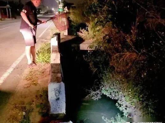 狗妈妈从墓园窜出拦车,停车才发现原来它是在求救!