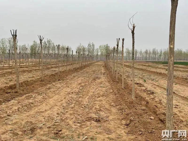 河北省丰润区,你耕地种树的事大家都知道了