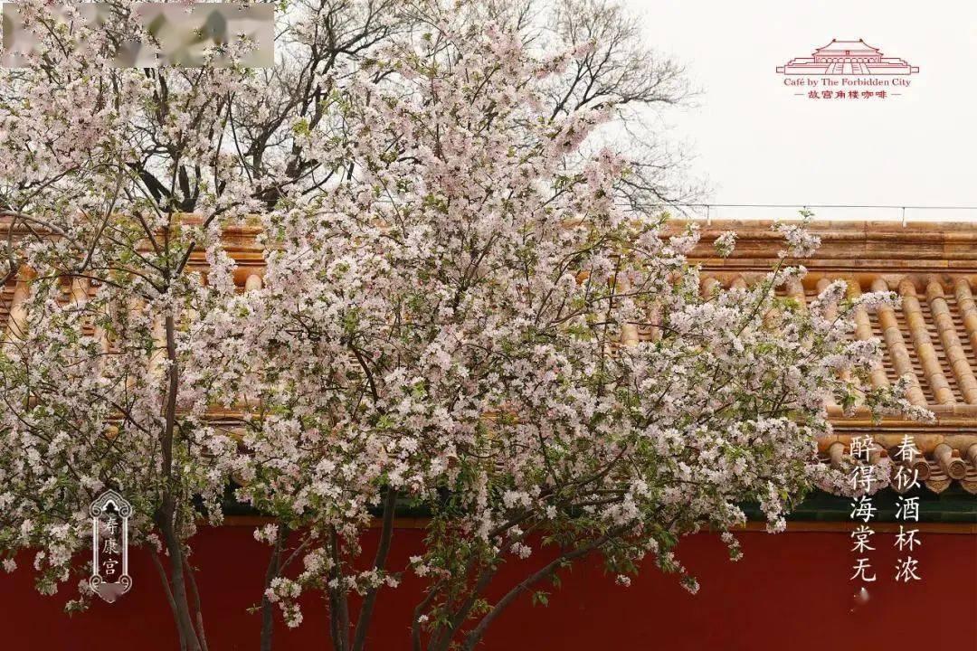 4月海棠季   故宫角楼咖啡新品包装设计,满园春色!