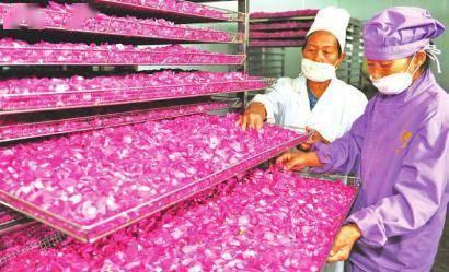 玫瑰花产业带富村民