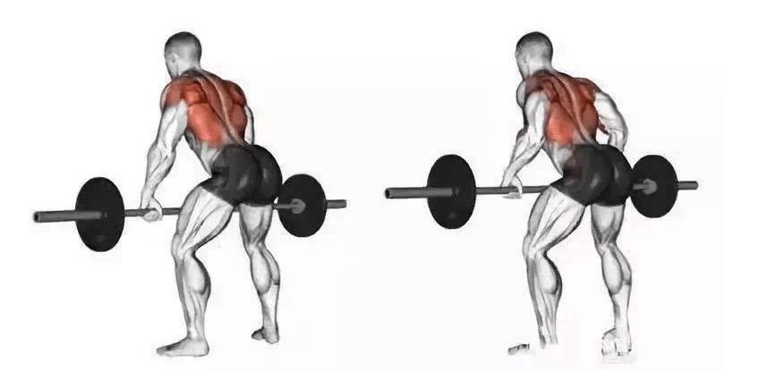 背部训练到达平台期,了解实用背部动作,帮你突破背部力量_锻炼
