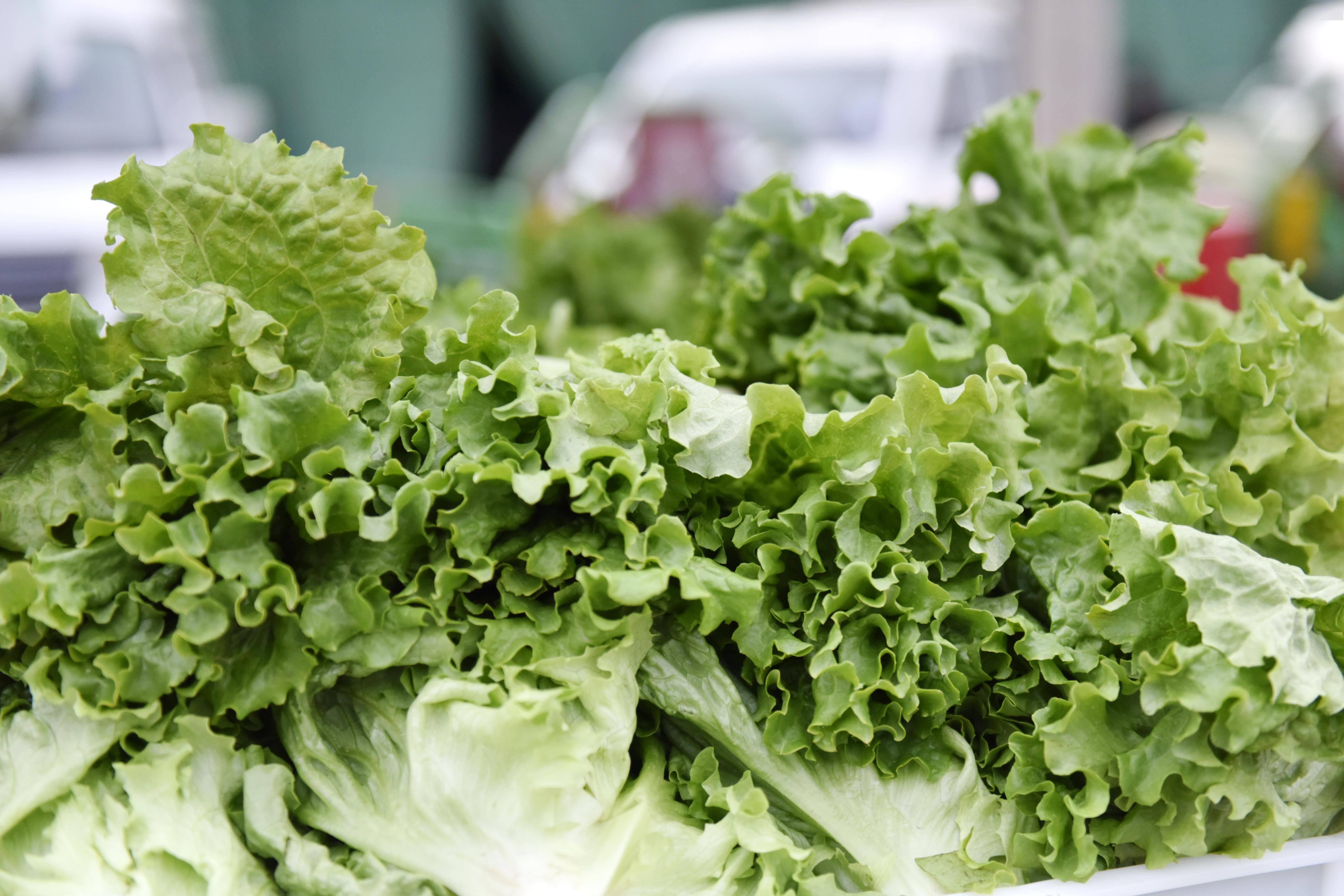 节日期间新发地蔬菜供应充足,部分蔬菜价格出现小幅波动