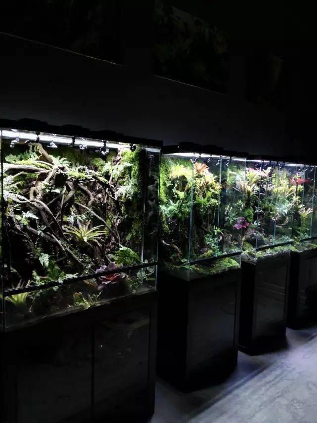 雨林(雨林生态缸)