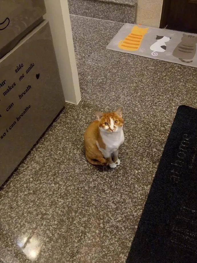 主人历次煮饭猫就吵着要看,所以主人就如许抱着,煮给它看