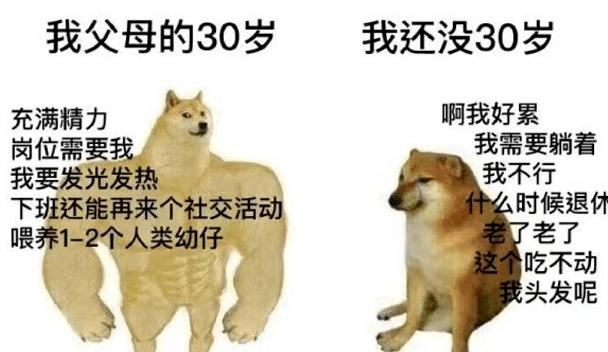 这个一直给Doge当配角的狗子,正在成为下一代Doge