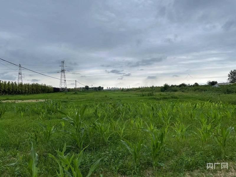 河南遂平在耕地上建超宽绿化带 当地表示立即整改