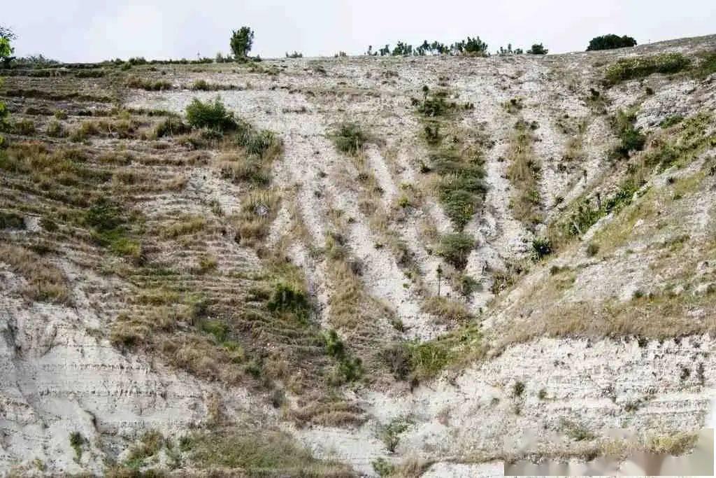 穷到吃土的海地,是文明世界的溃烂之地
