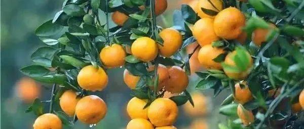 湖南水果采摘地图出炉!带你找到最可口的秋天鲜果~