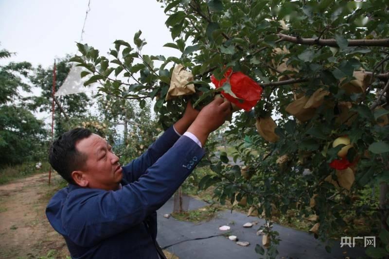 """长征路上新青年 志丹青年与他的红苹果乐园:这里藏着""""共富密码""""6lc"""