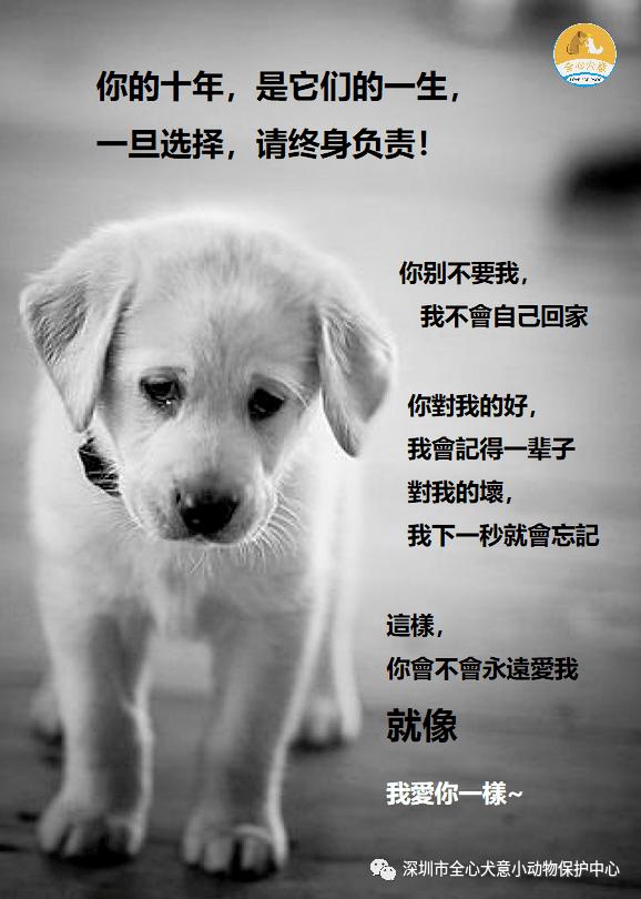 【宣传依法文明养犬,领养代替购买】10月22日-24日,皇庭广场萌宠趣玩节